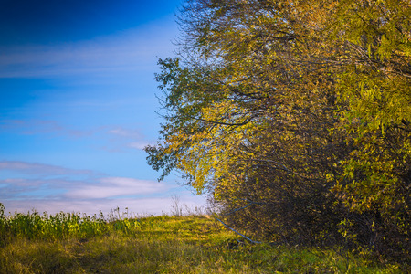 edge: autumn forest edge