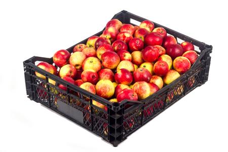 Crate avec des pommes rouges sur un fond blanc Banque d'images - 65101161