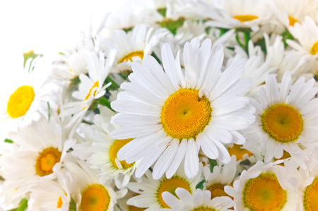 Chamomile flower close-up on bouquet background