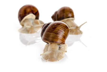 Three snails on white background