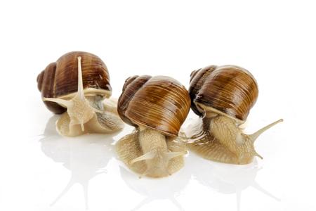 Three snails on white background