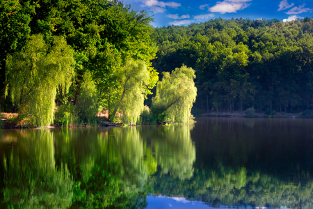 branches of willow in the sunlight on the shore of the lake