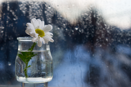 dullness: Flower In A Glass Vase Stands On The Windowsill. Outside, The Rain.