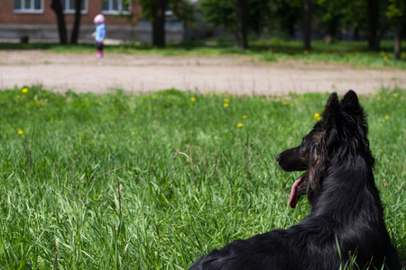 far away: Dog Lying On The Grass And Looks At The Child Who Is Far Away.