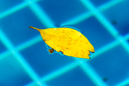 Yellow leaves float on the water on the pool.
