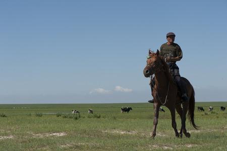 mongolia horse: Shepherd Stock Photo