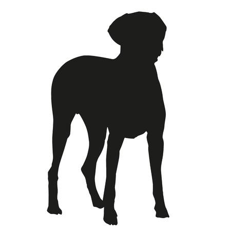pinky: silhouette of the Rhodesian Ridgeback