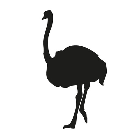 emu: Isolated ostrich. Vector silhouette