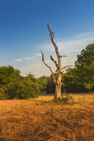 vectorized: Realistic dry vector tree. Sunset colors. Vectorized image