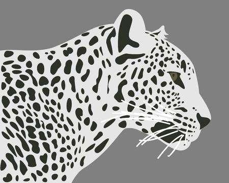 ceylon: Ceylon leopard illustration. Side view, profile. Leopard head