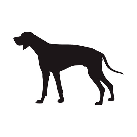 Dog vector silhouette, side view. Rhodian ridgeback. Hungarian Short-haired Pointing Dog