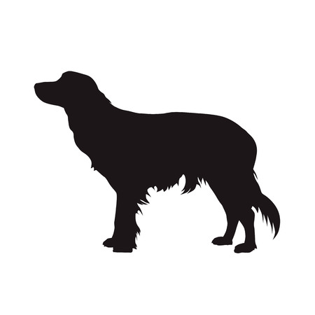 Kooikerhondje, little cager dog vector silhouette. Side view Vectores