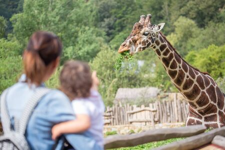 People in the zoo watching giraffe. Mom with baby, family trip. Giraffa camelopardalis reticulata Zdjęcie Seryjne