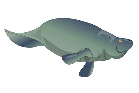 art: manatee  Illustration