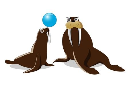 walrus: seal playing