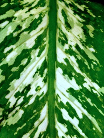 Abstract graphical pattern on a leaf Stock Photo