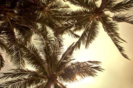 Sun rays through palm trees Stock Photo