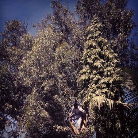Lumberjack on top of a tree