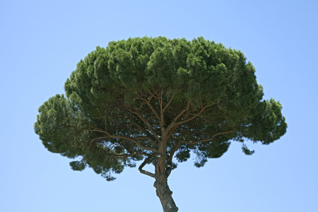 lush green tree with blue sky background