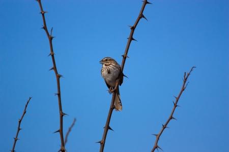 thorny: bird perched on a thorny bush Stock Photo