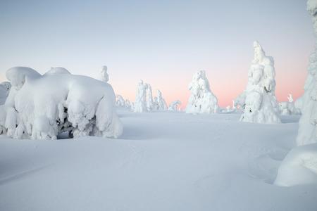 ラッピ州で木が雪に覆われています。 写真素材