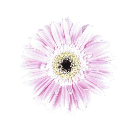 overexposed flower Stock Photo