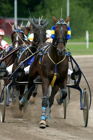 horse-racing Stock Photo