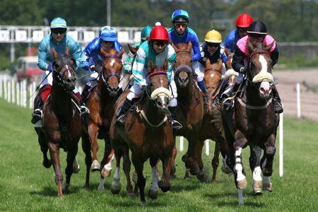 cavallo in corsa: cavalli di razza-in corso  Archivio Fotografico