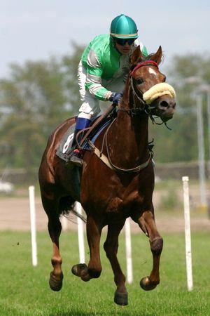 zsoké: horse and jockey