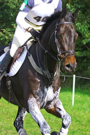 eventing: a horse and his rider during eventing track