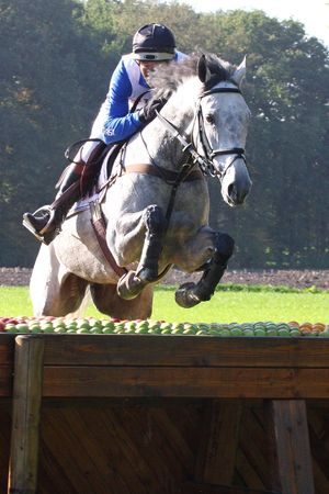 eventing: horse and rider following an eventing track Stock Photo
