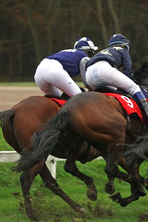 racecourse: horses and jockeys at race-course, up to the finish