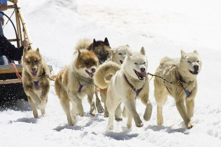 Dog-sledding with Huskies in Swiss Alps, Switzerland photo