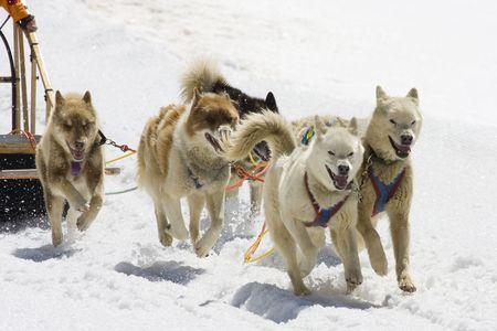 Dog-sledding with Huskies in Swiss Alps, Switzerland Stock Photo - 3415194