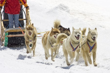 Dogsledding with Huskies in Swiss Alps, Switzerland Stock Photo - 4235356