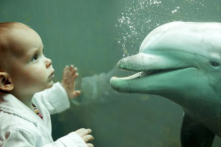 little girl having encounter with dolphin