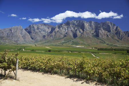 Beautiful vineyard along the wine route in Western Cape, South Africa. Mountains in background. Stock Photo