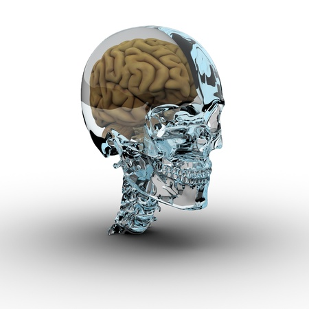 Glass skull with brain.  photo