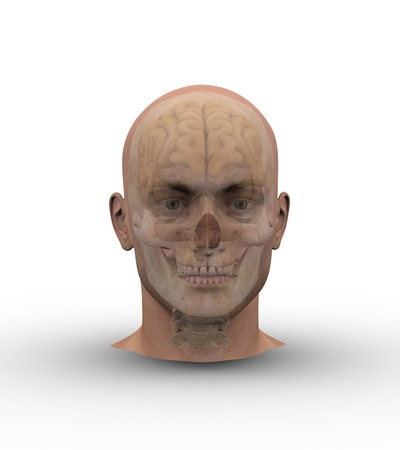 Male head with skull and brain showing through transparent skin.