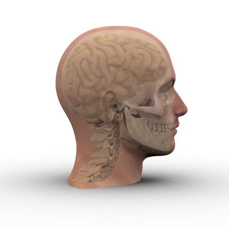 neurological: Male head with skull and brain showing through transparent skin.