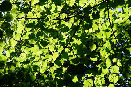schutz: Green Leaves