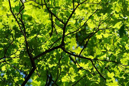 Hintergrund: Green Leaves