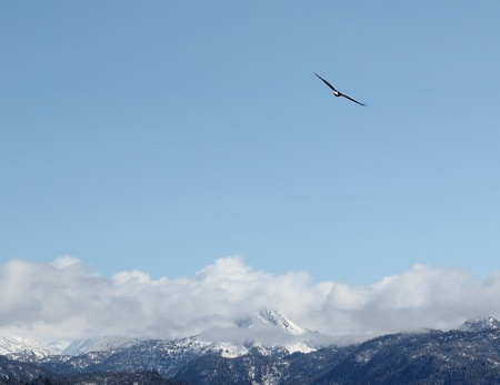 A lone bald eagle soaring over the mountains against a bright blue sky