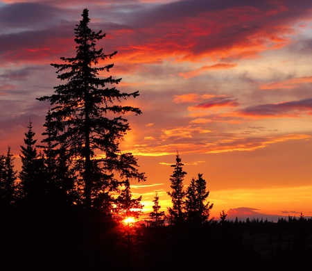 Dramatic colorful sunset with silhouetted spruce trees Stock Photo