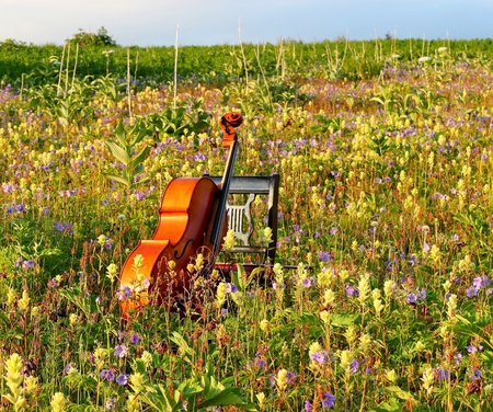 cello: Violoncello appoggiato su una sedia in un prato Archivio Fotografico