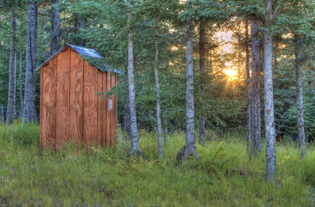 Rays of the setting sun through a young spruce forest near an Alaskan outhouse.