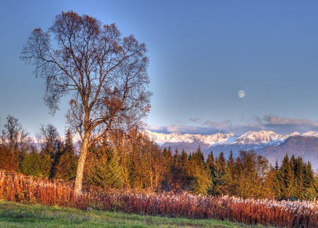 Full moon rising over the Kenai mountains with a large birch tree in autumn with warm evening light. photo