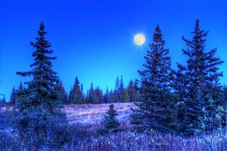 Full moon illuminating an Alaskan spruce forest in autumn.
