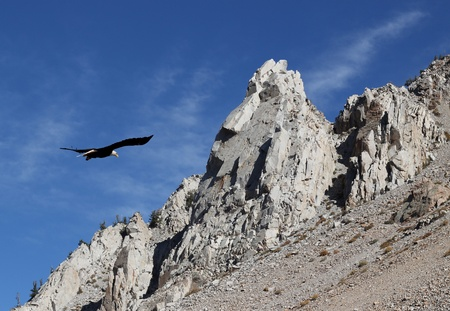 Bald eagle soaring around rocky peaks with a bright blue sky. Stock Photo - 11131942