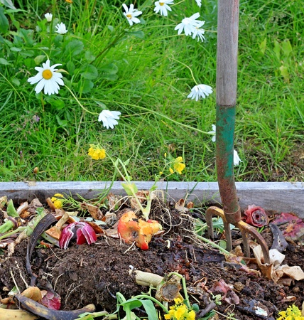 Close up view of a compost pile with turning pitchfork in summer with grass and daisies in the background.